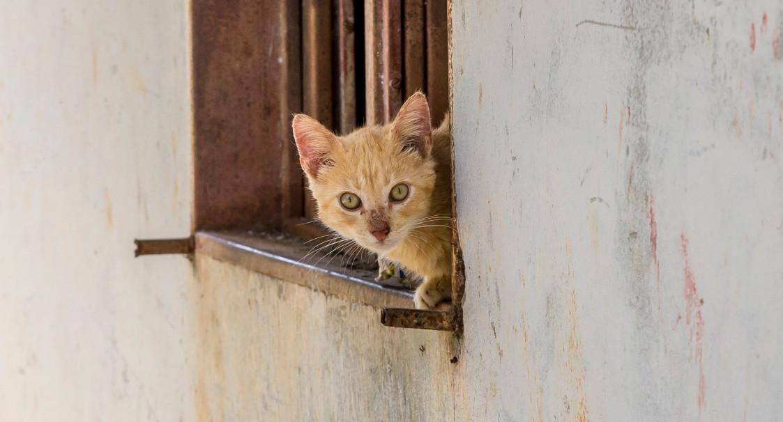 Colombiana murió en su casa en España y sus gatos devoraron su cuerpo